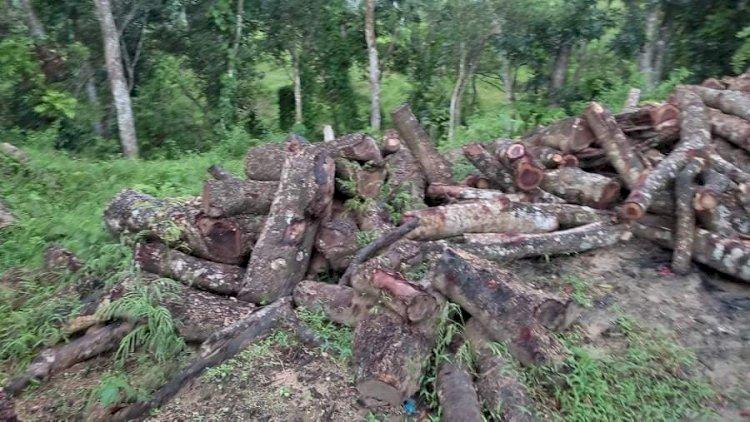 শ্রীমঙ্গল সাতগাঁও চা বাগান ব্যবস্থাপক কর্তৃক বাগানের গাছ কেটে উজাড়